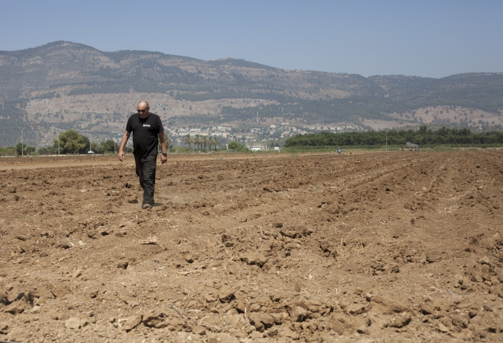 In this Wednesday, July 17, 2018, photo, Israeli farmer Ofer Moskovitz walks through his field near Kfar Yuval, Israel. A five-year drought is challenging Israel's strategy of addressing its water woes with desalination. With farmers reeling from parched fields and the country's most important bodies of water shrinking, Israel once again is having to cope with a stifling lack of water despite professing to have tackled the issue. (AP Photo/Caron Creighton)