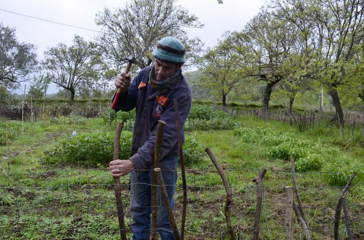 This March 26, 2018 photo shows writer Cain Burdeau hammering into the ground a post for a garden wattle fence he's making on a property he lives on with his family in Contrada Petraro in the mountains of northern Sicily. In northern Sicily, fences are essential to protect gardens against wild pigs. (Audrey Rodeman via AP)