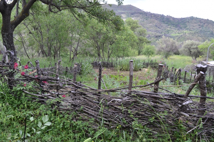 This May 4, 2018 photo shows a wattle fence made to protect a garden on a property in Contrada Petraro in the mountains of northern Sicily. In northern Sicily, fences are essential to protect gardens against wild pigs. (Cain Burdeau via AP)