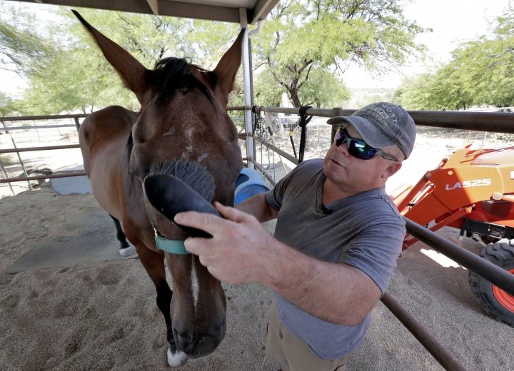In this Monday, Aug. 13, 2018 photo, Brian Madeux brushes his horse at his home in New River, Ariz. Madeux was the first person in the world to participate in a gene editing attempt in his body, for the inherited disease Hunter syndrome. Early partial results from the study were released on Wednesday, Sept. 5, 2018. (AP Photo/Matt York)