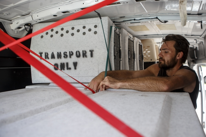 Evan Shepard, the lead canine behavior assessor for McKamey, works on securing kennels in a transport van at McKamey Animal Center on Wednesday, Sept. 12, 2018 in Chattanooga, Tenn. Shepard will travel with a volunteer to South Carolina to help free up shelter spaces for local animals as Hurricane Florence approaches the area. (C.B. Schmelter/Chattanooga Times Free Press via AP)