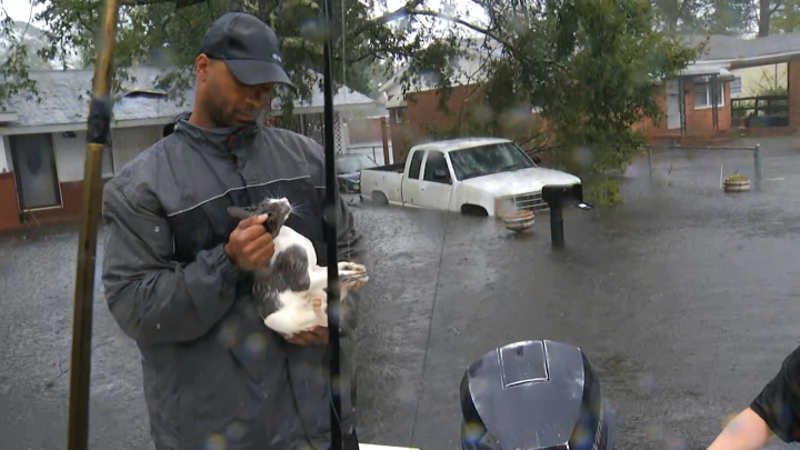 In this image from video, a resident holds a cat rescued by boat in floodwaters in Jacksonville, N.C., Friday, Sept. 14, 2018. (AP Photo/Robert Bumsted)