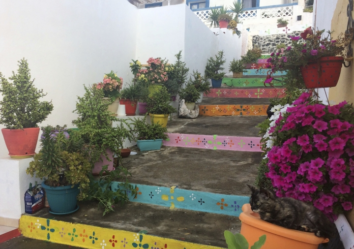 In this photo taken on Tuesday, Sept. 11, 2018, a cat sits on a flower pot, bottom right, along painted steps in the town of Linosa, on the island of Linosa, some 167 km (103.5 miles) south of Sicily, southern Italy. (AP Photo/Frances D'Emilio)