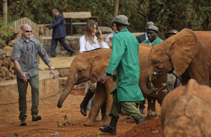 U.S. first lady Melania Trump steps backwards after being nudged by a baby elephant she petted, at the David Sheldrick Wildlife Trust elephant orphanage in Nairobi, Kenya Friday, Oct. 5, 2018.Trump took part in a baby elephant feeding on Friday as she visited a national park in Kenya to highlight conservation efforts. Kenya is the third stop on her Africa tour, which began Tuesday in Ghana and continued in Malawi on Thursday. (AP Photo/Ben Curtis, Pool)