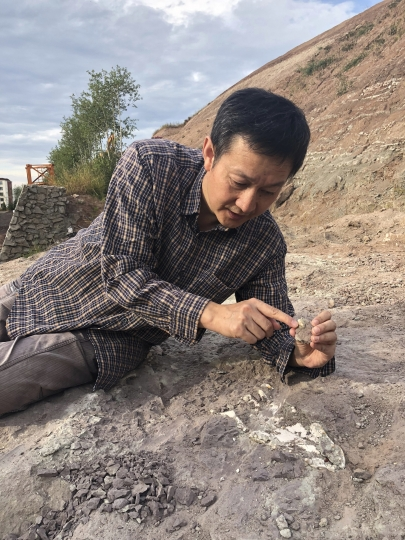 In this Sept. 12, 2018, photo, paleontologist Xu Xing examines an ancient crocodile skull and teeth, recovered from a dig site in Yanji, China. The excavation was begun after construction crews erecting new apartment buildings accidentally uncovered dinosaur bones and other fossils, dating back 100 million years. (AP Photo/Christina Larson)