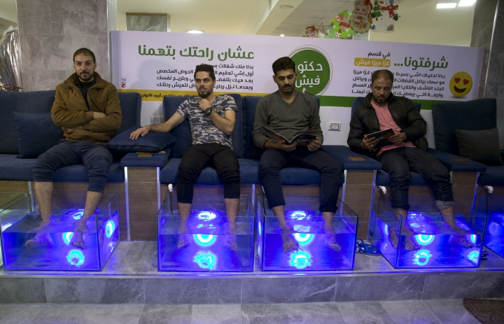 In this Wednesday, Dec. 26, 2018 photo, Palestinians soak their feet in tank stocked with fish at a cafe in Gaza City. The Gaza cafe operator said his business is booming after launching the fish pedicure service in the beleaguered Gaza Strip. A 30-minute session costs about $8 -- a hefty sum in the impoverished coastal enclave. But dozens of people are willing to pay the price for a temporary escape from the difficult living conditions in Gaza. (AP Photo/Khalil Hamra)
