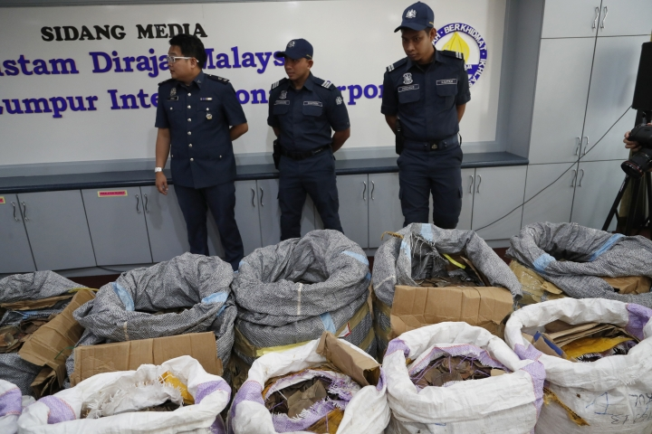 FILE - In this Monday, May 8, 2017 file photo, Malaysian Customs officials stand next to seized pangolin scales during a news conference in Sepang, Malaysia, announcing the 9.2 million ringgit ($2.1 million) seizure, believed to have been smuggled from Africa. The price of pangolin scales in China has risen from $11 per kilogram (2.2 pounds) in the 1990s to $470 in 2014, according to researchers at Beijing Forestry University. (AP Photo/Vincent Thian)