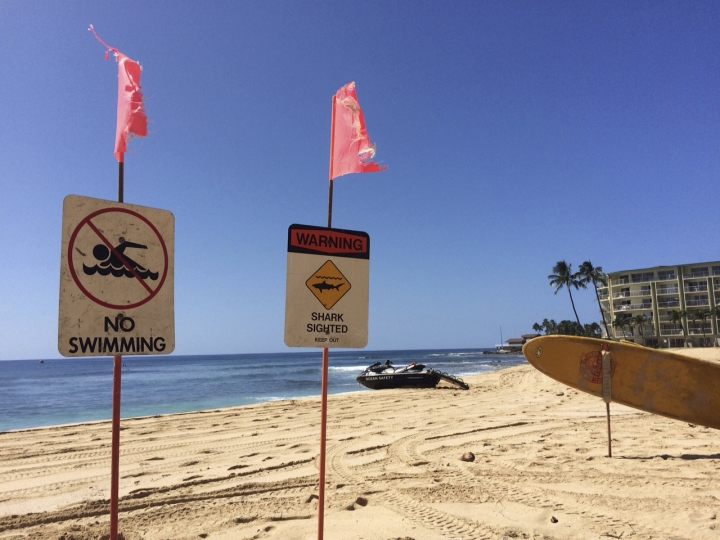 FILE - This Oct. 29, 2015, file photo shows signs warning of a shark sighting, which was posted at Makaha Beach Park in Waianae, Hawaii. University of Florida researchers say far fewer shark bites were reported worldwide last year. (AP Photo/Audrey McAvoy, File)