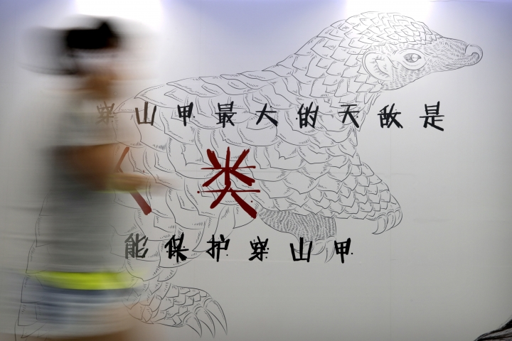 FILE - In this Aug. 25, 2016, file photo, a woman walks past an anti-pangolin trafficking billboard in an underground walkway in Beijing. Hong Kong customs officers have intercepted a record 8.3 tons of pangolin scales and hundreds of elephant tusks worth more than $8 million combined, underscoring the threat to endangered species from demand in Asia. (AP Photo/Andy Wong, File)