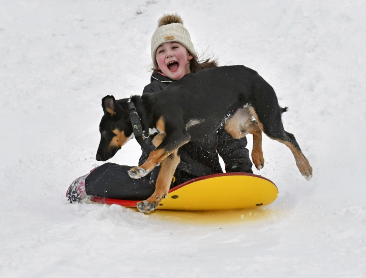 Kylie Silvia, 7, of Sedro-Woolley slides down a hill Saturday, Feb. 9, 2019, at the Northern State Recreation Area while being chased by Atlas, one of the two family dogs. The National Weather Service is predicting more snow throughout the week in Northwest Washington. (Scott Terrell/Skagit Valley Herald via AP)