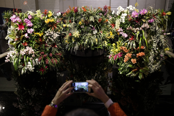 "A visitor makes a photograph of an instillation during a preview of the ""Flower Power"" themed Philadelphia Flower Show at the at the Pennsylvania Convention Center in Philadelphia, Friday, March 1, 2019. (AP Photo/Matt Rourke)"