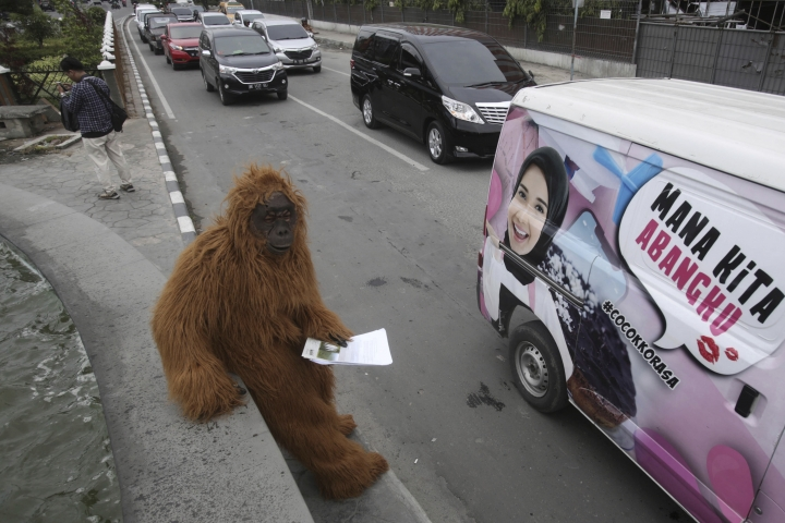 In this Friday, March 1, 2019, an activist in an orangutan suit stands on a roadside during a protest against the construction of a Chinese-backed dam that they claimed will rip through the habitat of the most critically endangered orangutan species in Medan, North Sumatra, Indonesia. A state administrative court in North Sumatra's capital, Medan, ruled that the construction can continue despite critics of the 510-megawatt hydro dam providing evidence that its environmental impact assessment was deeply flawed. (AP Photo/Binsar Bakkara)