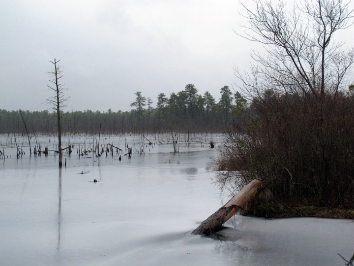 This Jan. 6, 2014 photo shows a section of the Pinelands region in Lakehurst N.J. On March 25, 2019, the New Jersey Department of Environmental Protection ordered five companies that make chemicals used to stain-proof clothing and make non-stick cookware to fund a plan to clean up contamination of the state's environment, including waterways, that have been tainted by the presence of the chemicals. (AP Photo/Wayne Parry)