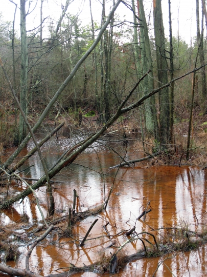 This Jan. 6, 2014 photo shows a stream running through a wooded area in Lakehurst, N.J. On March 25, 2019, the New Jersey Department of Environmental Protection ordered five companies that make chemicals used to stain-proof clothing and make non-stick cookware to fund a plan to clean up contamination of the state's environment, including waterways, that have been tainted by the presence of the chemicals. (AP Photo/Wayne Parry)