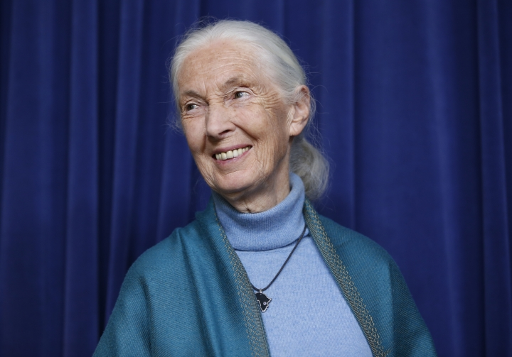 Primatologist Jane Goodall smiles after being honored for the lifetime achievements at a ceremony on her 85th birthday at City Hall in Los Angeles Wednesday, April 3, 2019. (AP Photo/Damian Dovarganes)