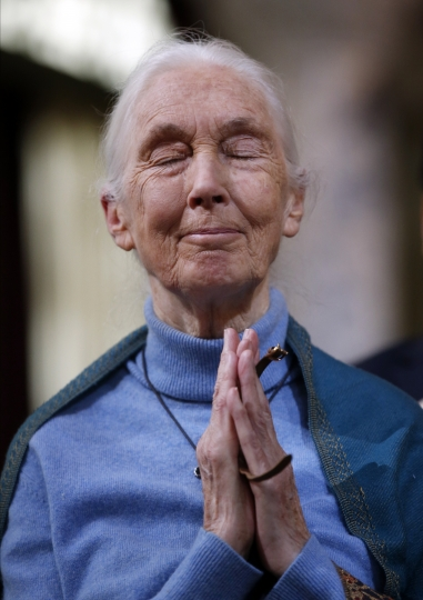 Primatologist Jane Goodall thanks Los Angeles city leaders after being honored for the lifetime achievements any a ceremony on her 85th birthday at the City Hall in Los Angeles, Wednesday, April 3, 2019. (AP Photo/Damian Dovarganes)