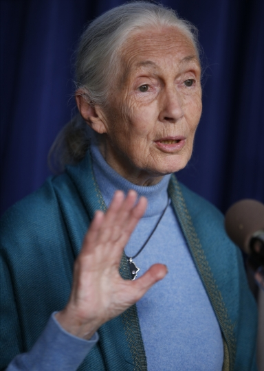 Primatologist Jane Goodall speaks about the environment after being honored for the lifetime achievements at a ceremony on her 85th birthday at the City Hall in Los Angeles, Wednesday, April 3, 2019. (AP Photo/Damian Dovarganes)