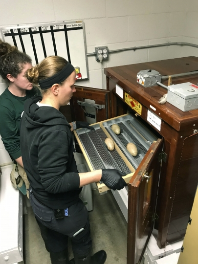 In this Feb. 26, 2019 photo provided by the Freeport-McMoRan Audubon Species Survival Center, avian propagation keeper Amanda Lewis, foreground, and bird intern Samantha Grabarz, take measurements and load whooping crane eggs into an incubator at the center in New Orleans. State wildlife biologists swap egg-shaped data loggers for one of the two eggs that many cranes lay. The real eggs come to Audubon Nature Institute, where they're incubated until they're nearly ready to hatch. Then biologists return the real eggs to their home nests and take back the fakes, which give up their data through an infrared connection. The spy eggs may help Louisiana biologists learn why some whooping crane chicks die in the egg, while others hatch. (Richard Dunn/Freeport-McMoRan Audubon Species Survival Center via AP)