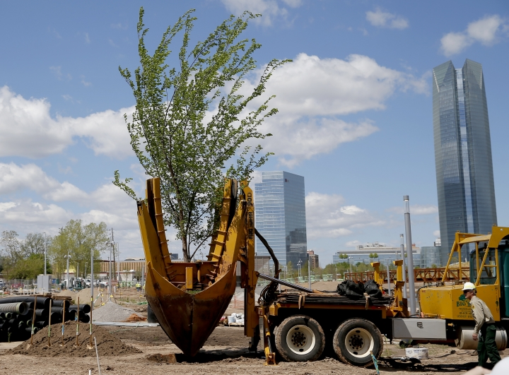 A Survivor Tree clone is transplanted on the grounds Scissortail Park in Oklahoma City, Friday, April 19, 2019. The Survivor Tree is the 110-year-old American Elm that survived the 1995 bombing of Alfred P. Murrah Federal Building in Oklahoma City. (Sarah Phipps/The Oklahoman via AP)