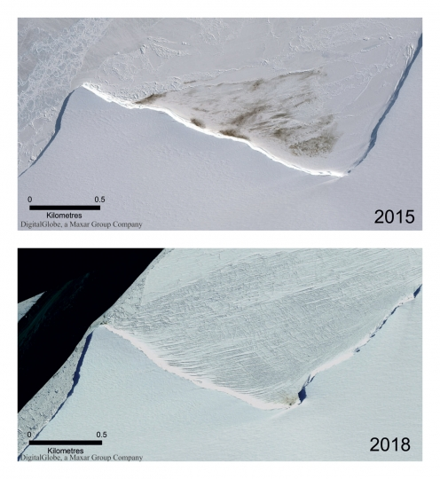 This combination of satellite photos provided by Maxar Technologies via the British Antarctic Survey shows the site of the Halley Bay emperor penguin colony in 2015 and 2018. A study released on Wednesday, April 24, 2019 finds that since 2016 there are almost no births at Halley Bay, the second biggest breeding ground for emperor penguins. Numbers are booming nearby, but it doesn't make up for the losses at Halley Bay. (Maxar Technologies/British Antarctic Survey via AP) Satellite Images ©2019 Maxar Technologies
