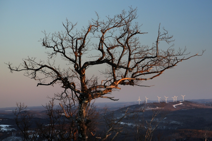 This Tuesday, March 19, 2019 photo shows a wind farm atop a hill behind a large tree in Canton, Maine. According to the National Conference of State Legislatures, the state is among 11 that either flipped the governor's seat from Republican to Democrat or saw Democrats win newfound control over the Legislature in the 2018 elections. All have passed or are weighing legislation that would expand renewables in their states, the Associated Press found. (AP Photo/Robert F. Bukaty)