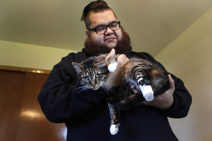 Adam Schofield holds his tabby cat named Sgt. Stubbs in his Oak Creek, Wis. apartment Friday, May 3, 2019. Sgt. Stubbs has one of two new prosthetic back legs on that were created by a University of Wisconsin-Madison engineering class. A vet had to amputate parts of his back legs last year after he was found as a stray with infected back legs. The students used a 3D printer and extra straps so the cat couldn't remove it easily. (AP Photo/Carrie Antlfinger)