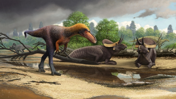 This illustration provided by Andrey Atuchin and Virginia Tech in May 2019 shows a Suskityrannus hazelae, foreground, a cousin of the Tyrannosaurus rex. It weighed between 45 and 90 pounds. (Andrey Atuchin/Virginia Tech via AP)