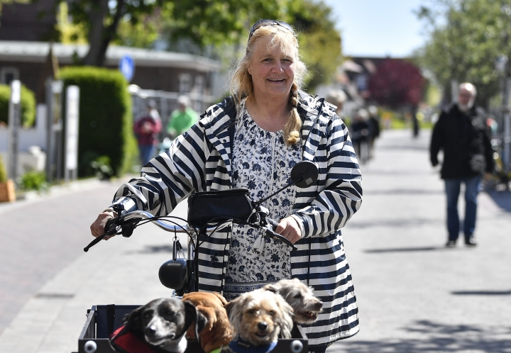 In this photo taken on Wednesday, May 15, 2019, Susanne Hasenpflug takes dogs on a tour on her bicycle on the car-free environmental island of Langeoog in the North Sea, Germany. Concerns about climate change have prompted mass protests across Europe for the past year and are expected to draw tens of thousands onto the streets again Friday, May 24. For the first time, the issue is predicted to have a significant impact on this week's elections for the European Parliament. (AP Photo/Martin Meissner)