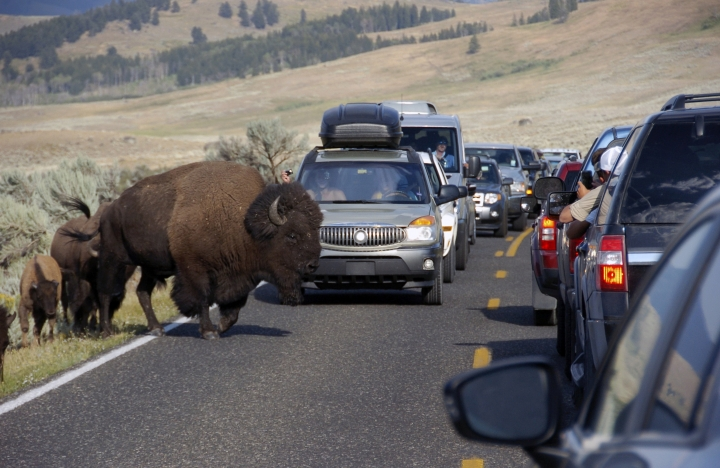 FILE - In this Aug. 3, 2016, file photo, a large bison blocks traffic as tourists take photos of the animals in the Lamar Valley of Yellowstone National Park in Wyo. A federal report shows visitors to Yellowstone National Park spent nearly $513 million in neighboring communities last year. The report last week from the National Park Service indicates the spending by the park's 4.1 million visitors supported nearly 7,100 jobs in the area in 2018. (AP Photo/Matthew Brown, File)