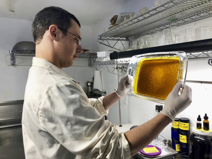 In this April 12, 2019, photo, Erich Berkovitz, owner of a medical marijuana processing company called PharmaEx LLC, holds a glass tray coated with hash oil, also called live resin, after extracting the material from raw marijuana plants and processing it at his lab in Rickreall, Ore. Berkovitz runs the last medical marijuana processing company in Oregon. The number of processors for medical marijuana products has fallen from 100 to one since the state legalized the use of cannabis for all adults. (AP Photo/Gillian Flaccus)
