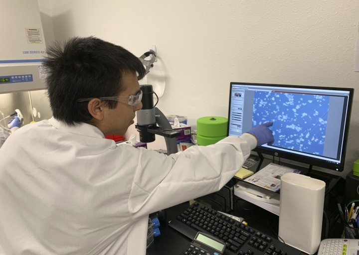 In this photo taken March 1, 2019, lab technician Ismael Montanez points to fish cells on screen in the laboratory of Finless Foods, a startup that's developing cell-based fish in Emeryville, Calif. A growing number of startups worldwide are making cell-based or cultured meat that doesn't require slaughtering animals. (AP Photo/Terry Chea)