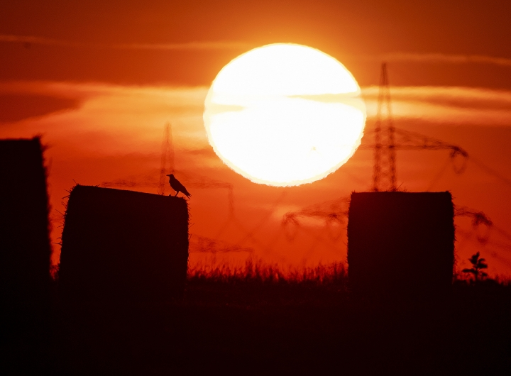 A bird sits on a straw bale on a field in Frankfurt, Germany, as the sun rises on Thursday, July 25, 2019. A heatwave struck large parts of Europe. (AP Photo/Michael Probst)