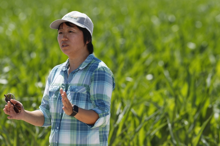 In this Thursday, July 11, 2019, photograph, United States Department of Agriculture Huihui Zhang at a research farm northeast of Greeley, Colo. Researchers are using drones carrying imaging cameras over the fields in conjunction with stationary sensors connected to the internet to chart the growth of crops in an effort to integrate new technology into the age-old skill of farming. (AP Photo/David Zalubowski)