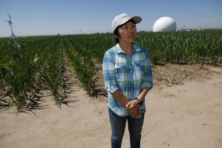 In this Thursday, July 11, 2019, photograph, Huihui Zhang of the United States Department of Afgriculture talks about efforts to use technology at a research farm northeast of Greeley, Colo. Researchers are using drones carrying imaging cameras over the fields in conjunction with stationary sensors connected to the internet to chart the growth of crops in an effort to integrate new technology into the age-old skill of farming. (AP Photo/David Zalubowski)