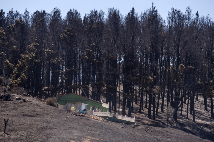 Burnt trees are seen next to a house after a wildfire in Canary Islands, Spain, Tuesday, Aug. 20, 2019. The wind dropped in the Canary Islands Tuesday, allowing firefighters to make progress against Spain's biggest wildfire so far this year and raising the possibility some evacuated residents may soon be able to return home. (AP Photo/Arturo Jimenez)
