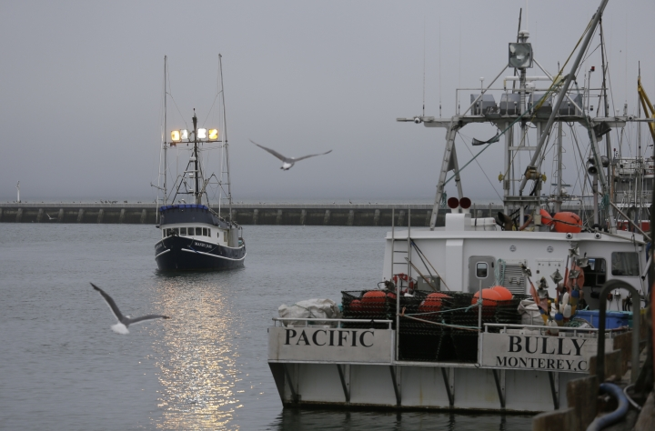 In this photo taken Monday, July 22, 2019, a boat with chinook salmon makes its way to Fisherman's Wharf to unload its catch in San Francisco. California fishermen are reporting one of the best salmon fishing seasons in more than a decade, thanks to heavy rain and snow that ended the state's historic drought. It's a sharp reversal for chinook salmon, also known as king salmon, an iconic fish that helps sustain many Pacific Coast fishing communities.(AP Photo/Eric Risberg)
