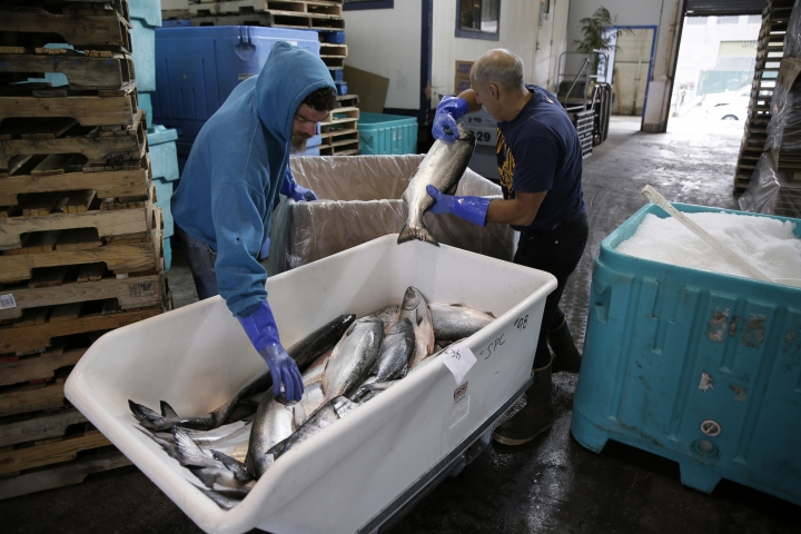 In this photo taken Monday, July 22, 2019, Mark Adams, right, unloads chinook salmon inside a cooperative at Fisherman's Wharf in San Francisco. California fishermen are reporting one of the best salmon fishing seasons in years, thanks to heavy rain and snow that ended the state's historic drought. A marine scientist with California's fish and wildlife agency says commercial catches have so far surpassed official preseason forecasts by roughly 50 percent. (AP Photo/Eric Risberg)