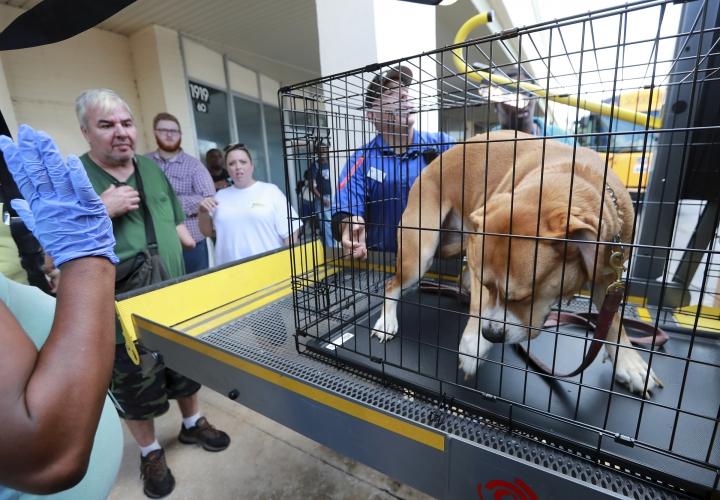 Leonard Baker, left, looks on as his dog Chick is loaded on a bus as they and other locals board buses at Lanier Plaza to leave the area under mandatory evacuation ahead of Hurricane Dorian, Monday, Sept. 2, 2019, in Brunswick, Ga. (Curtis Compton/Atlanta Journal-Constitution via AP)