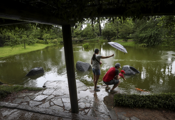 "Seventeen-month-old Kalin Mulligan reaches for a fish with the help of his father, Ryan Mulligan, as his mother Noon shields them from the rain, in the Japanese Garden in Hermann Park, on Tuesday, Sept. 17, 2019, in Houston. ""It's been so hot, just a reprieve from the heat,"" Ryan Mulligan said when asked why the family came out in the rain. (Jon Shapley/Houston Chronicle via AP)"