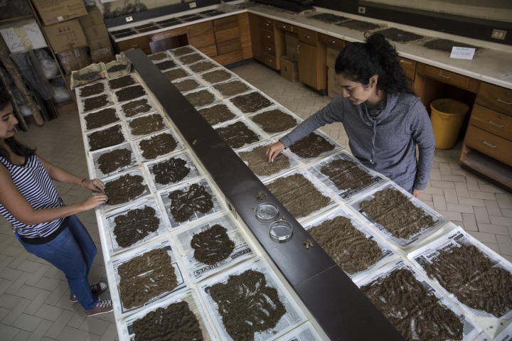 In this Feb. 20, 2019 photo, scientists Cherry Andrea Rojas, right, and Mariana Cardenas, organize soil samples to measure the content of organic matter and soil moisture, in a laboratory at Andes University in Merida, Venezuela. A team of scientists in Venezuela is trying to weather the political and economic crisis engulfing their country to record what happens as Venezuela's last glacier vanishes. (AP Photo/Rodrigo Abd)