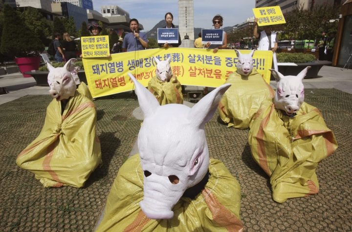 "Animal right activists wearing pig masks stage a memorial rally for those slaughtered due to African swine fever in Seoul, South Korea, Thursday, Sept. 26, 2019. South Korea on Wednesday said it was intensifying efforts to clean farms around the country as it scrambles to contain the spread of the highly contagious African swine fever that has ravaged farms near its border with North Korea. The banner reads "" Stop burial of living pigs."" (AP Photo/Ahn Young-joon)"