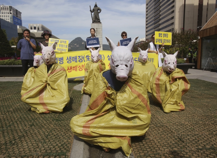 """Animal right activists wearing pig masks stage a memorial rally for those slaughtered due to African swine fever in Seoul, South Korea, Thursday, Sept. 26, 2019. South Korea on Wednesday said it was intensifying efforts to clean farms around the country as it scrambles to contain the spread of the highly contagious African swine fever that has ravaged farms near its border with North Korea. The banner reads """" Stop burial of living pigs."""" (AP Photo/Ahn Young-joon)"""