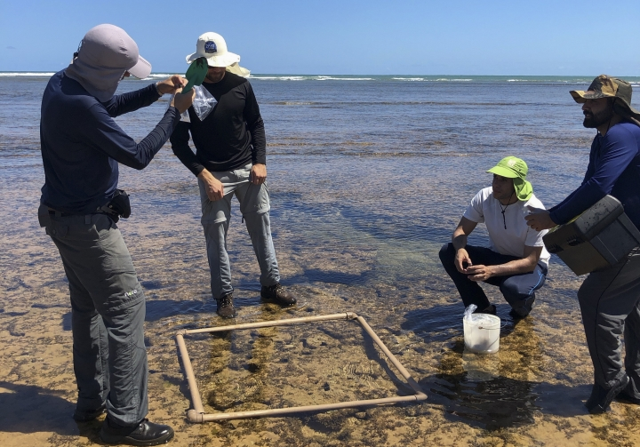 In this Oct. 23, 2019 photo released by Francisco Kelmo, researchers from the Bahia Federal University collect material contaminated by an oil spill in Camacari, Bahia state, Brazil. According to the Navy, which is overseeing an investigation, its primary hypothesis is that te oil spilled from a boat navigating off Brazil's shore. (Francisco Kelmo via AP)