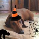 Halloween 1 181008 184929
