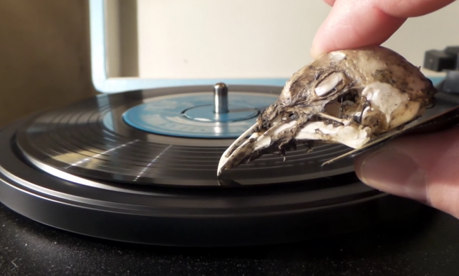 seagull-skull-turntable-needle