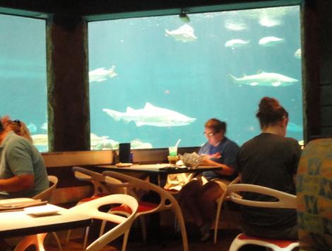 Sharks Underwater Grill - Sea World