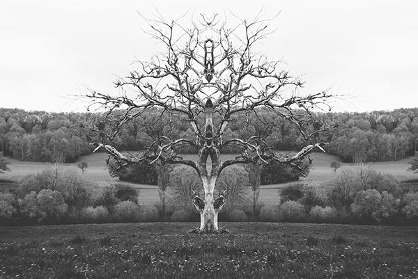 Symmetrical Landscape Photos Are Nature's Rorschach Test