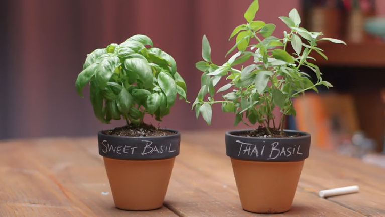 Video: Charming & Changeable Chalkboard Pots | eHow