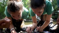Icon for: Project TRUE - Teens Researching Urban Ecology