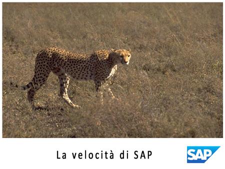 LA VELOCITA' DI SAP